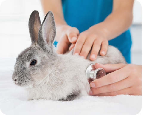 Windsor Animal Clinic - We Treat Bunnies