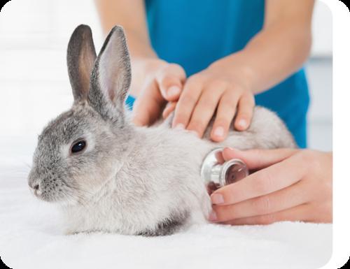 Windsor Animal Clinic - We Treat Bunnies