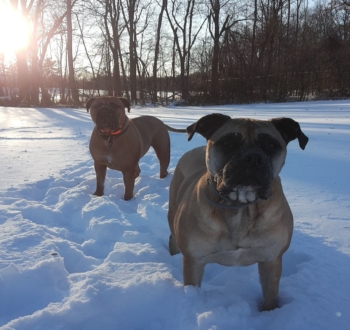 Windsor Animal Clinic Pets