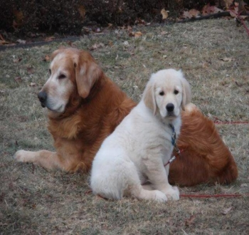 Shiloh and Aengus